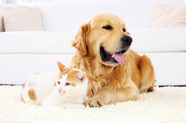 De-hair your home with our professional carpet cleaners to remove pet hair